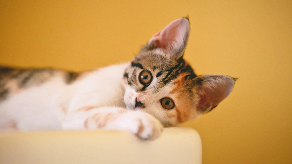 Malas noticias para los amantes de los gatetes: a diferencia de los perretes, los mininos no entienden cuando les hablamos