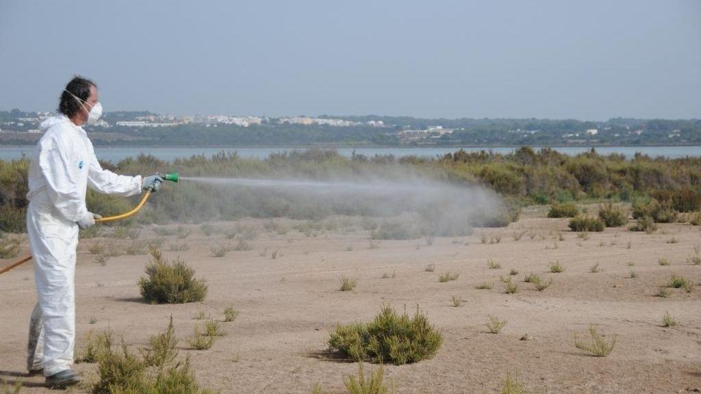 Formentera duplica las intervenciones contra larvas de mosquitos en el Parque Natural de ses Salines