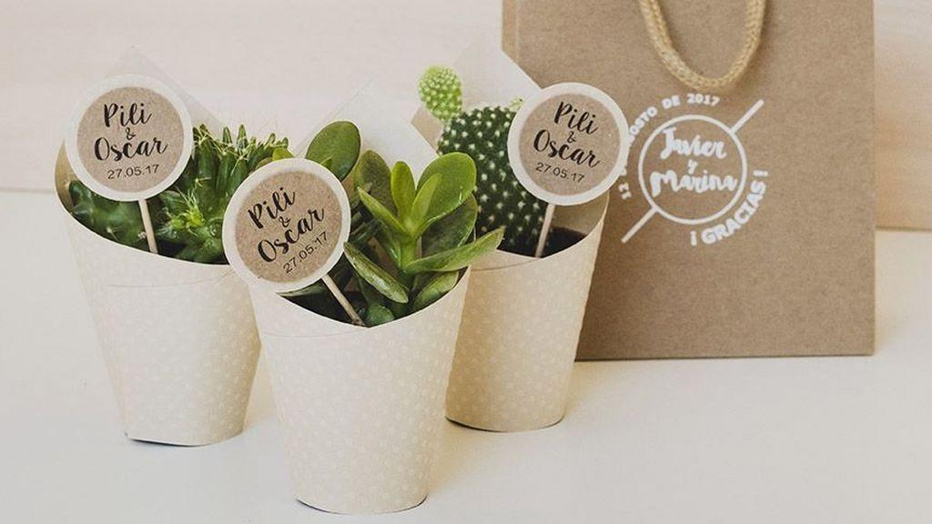 mirandagreen-plantas
