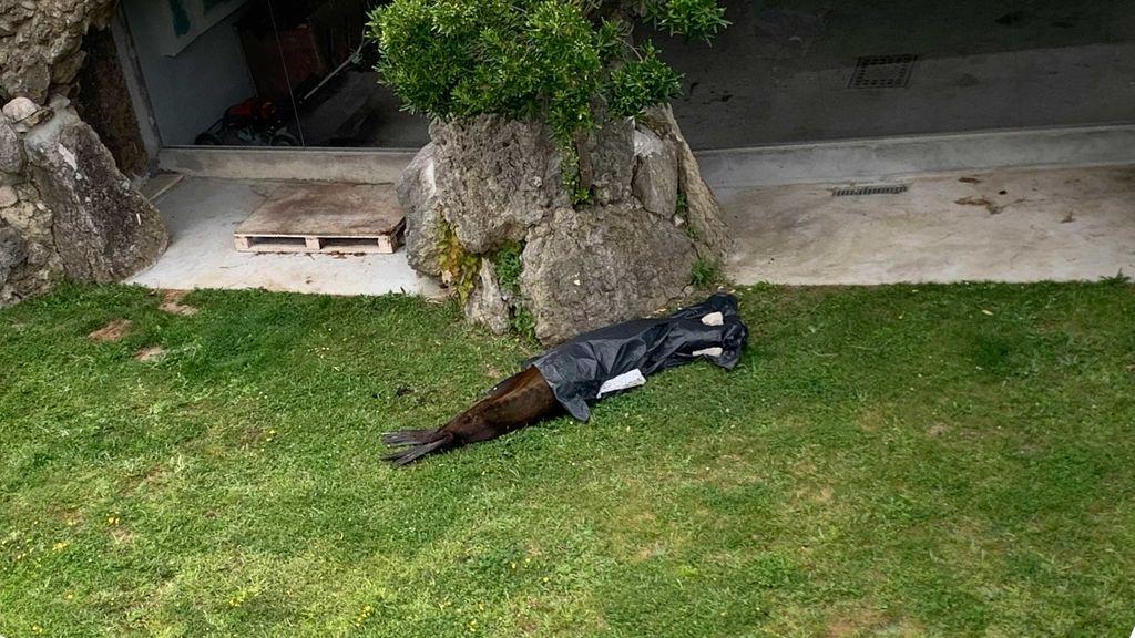 Indignación por el descuido de animales en el minizoo de La Magdalena: algunos han muerto por la falta de agua