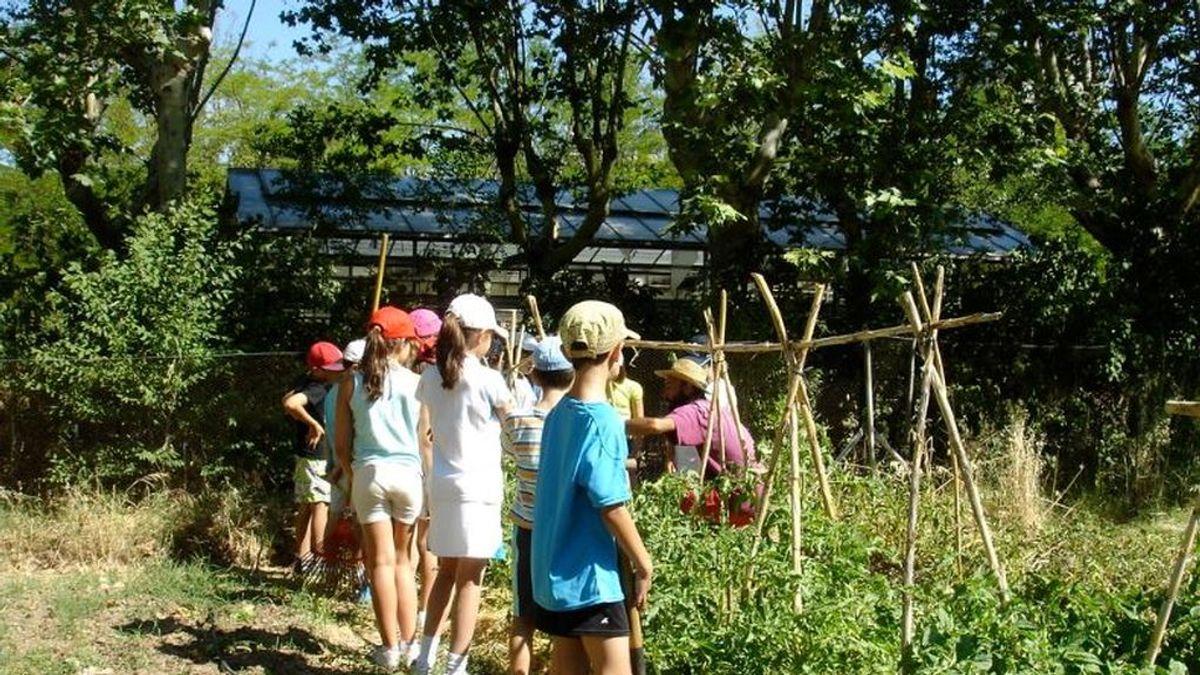 Campamentos de verano: a la espera de lo que diga Sanidad para ponerlos en marcha