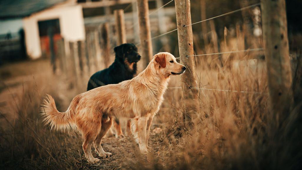 """Perros abandonados durante el confinamiento: El 60% de los perros que llegan a los refugios han tenido que ser ingresados""""."""