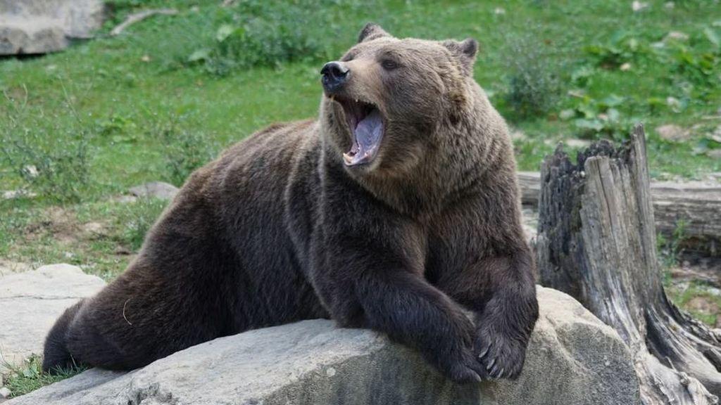 Perseguido por un oso: un niño camina manteniendo la calma mientras el animal no le quita ojo