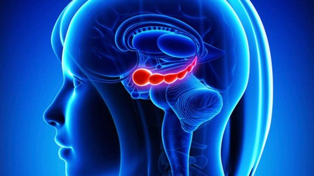 Un estudio de la Universidad de Yale averigua en qué parte del cerebro se activa el estrés