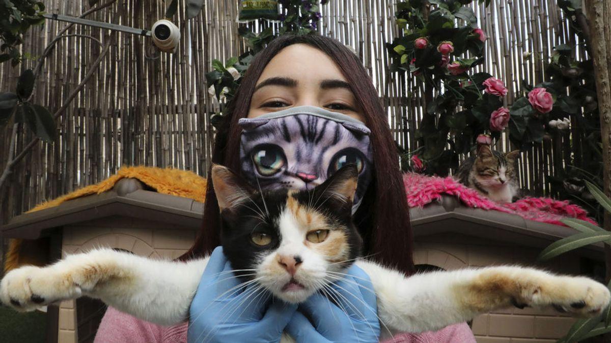 Gatos sí, cerdos no: el riesgo del contagio animal del coronavirus