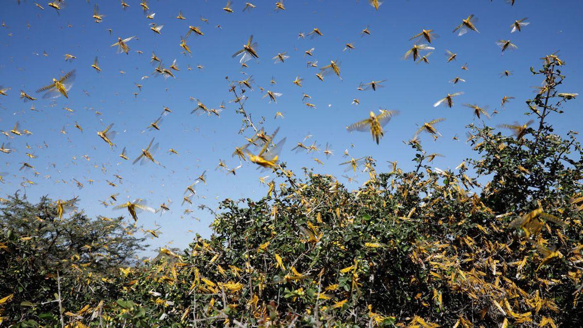 Tormenta tropical y plaga de langosta del desierto: la cuarentena se complica en la India
