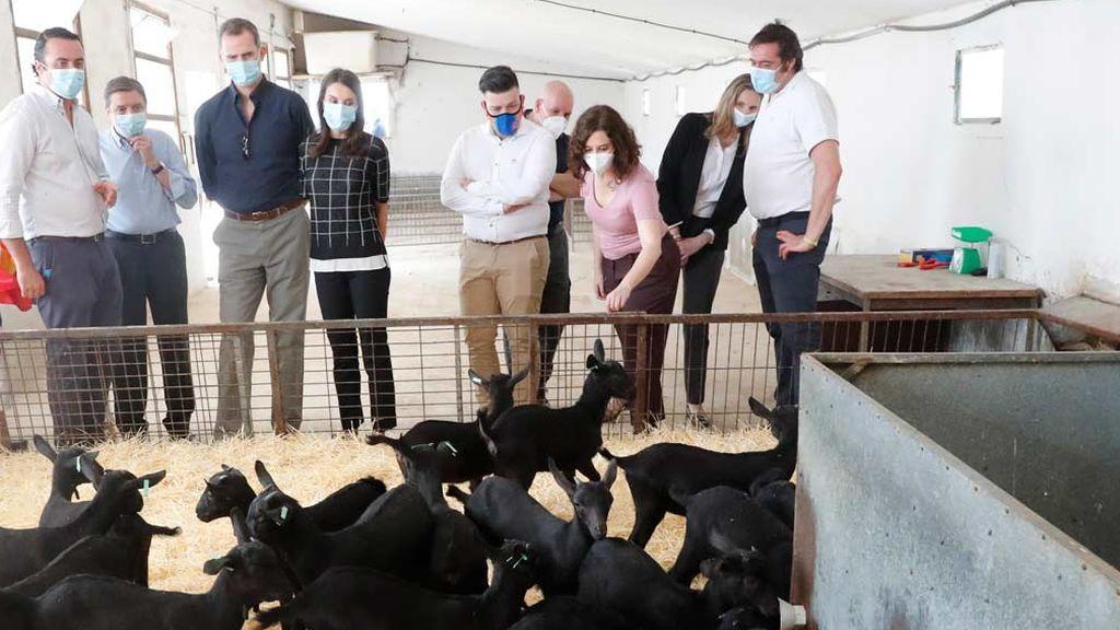 Los reyes visitan una granja de cabras junto con la presidenta Isabel Díaz Ayuso