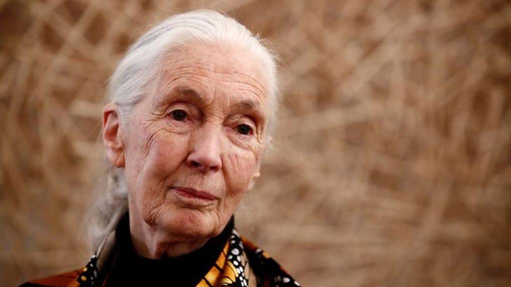 """Jane Goodall: """"Si no encontramos una manera mejor de vivir, seremos una especie extinguida"""""""