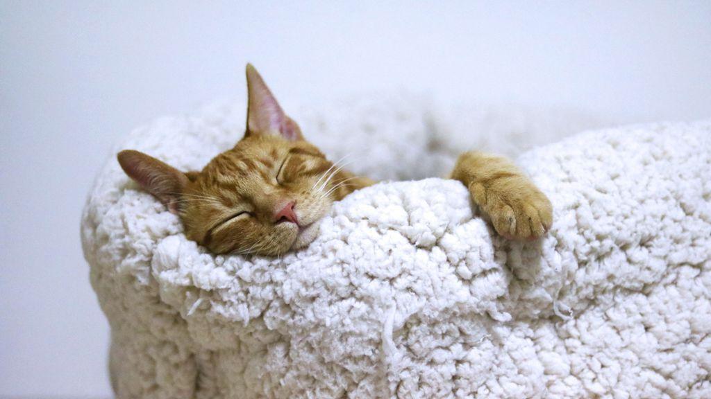 Dormir con tu gato puede tener beneficios para el sueño