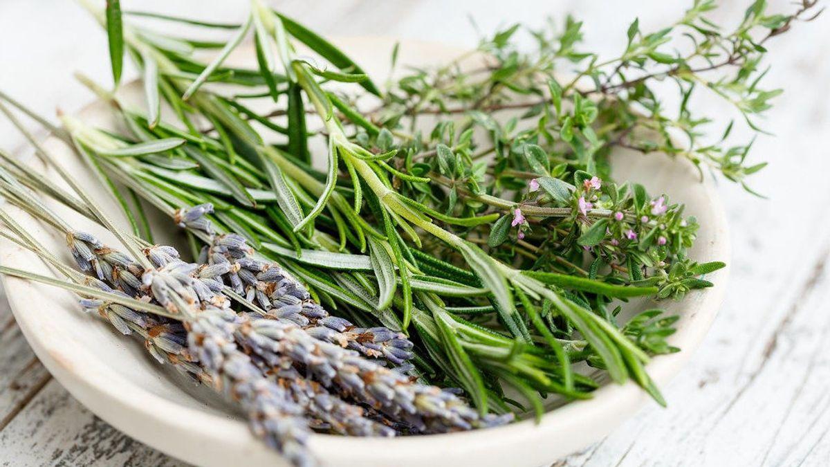 Plantas aromáticas para tu jardín que te ahuyentarán los insectos