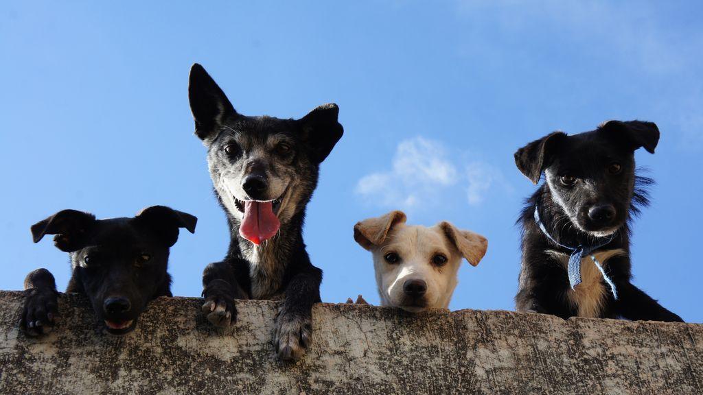 5 Beneficios de las mascotas en las personas mayores.