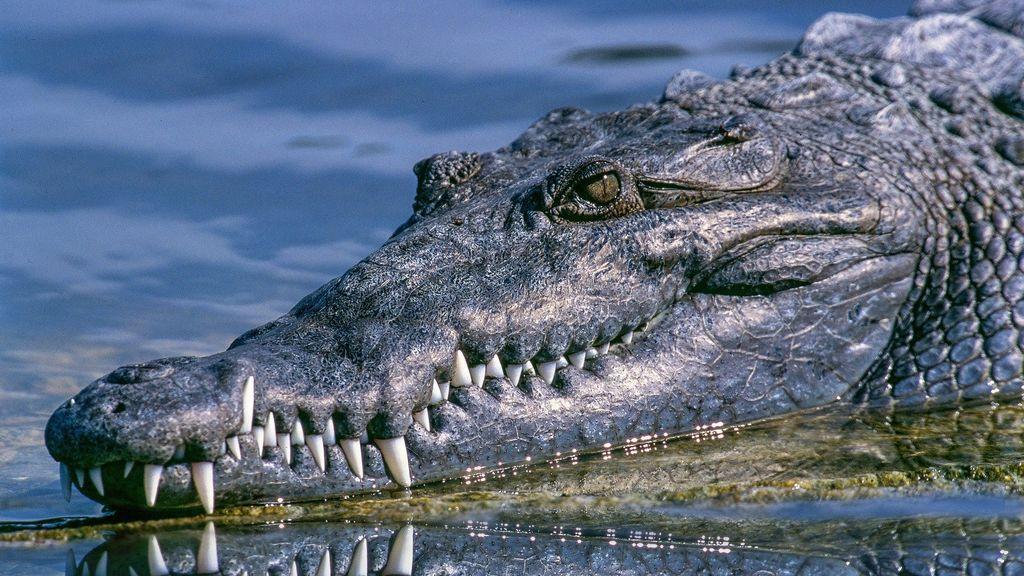 Un caimán de casi 3 metros ataca a un joven de 14 años en Florida