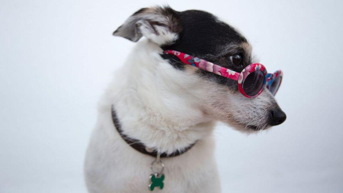Evita que tu perrete lo pase mal con el calor tanto fuera como dentro de casa y disfrute del verano