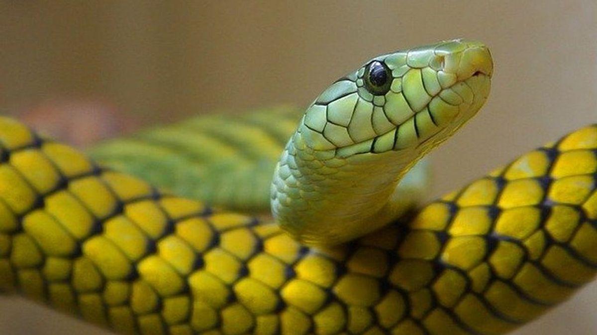 Echa a una serpiente de su casa tras atraparla y al regresar se encuentra docenas