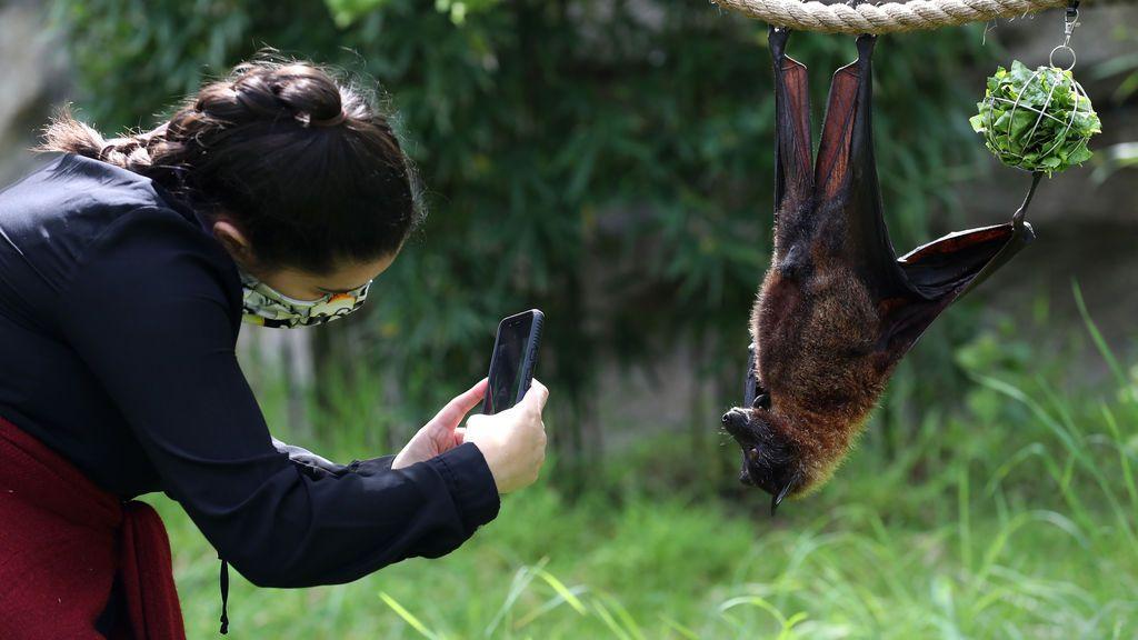 Murciélago de la fruta en el zoo de Oakland