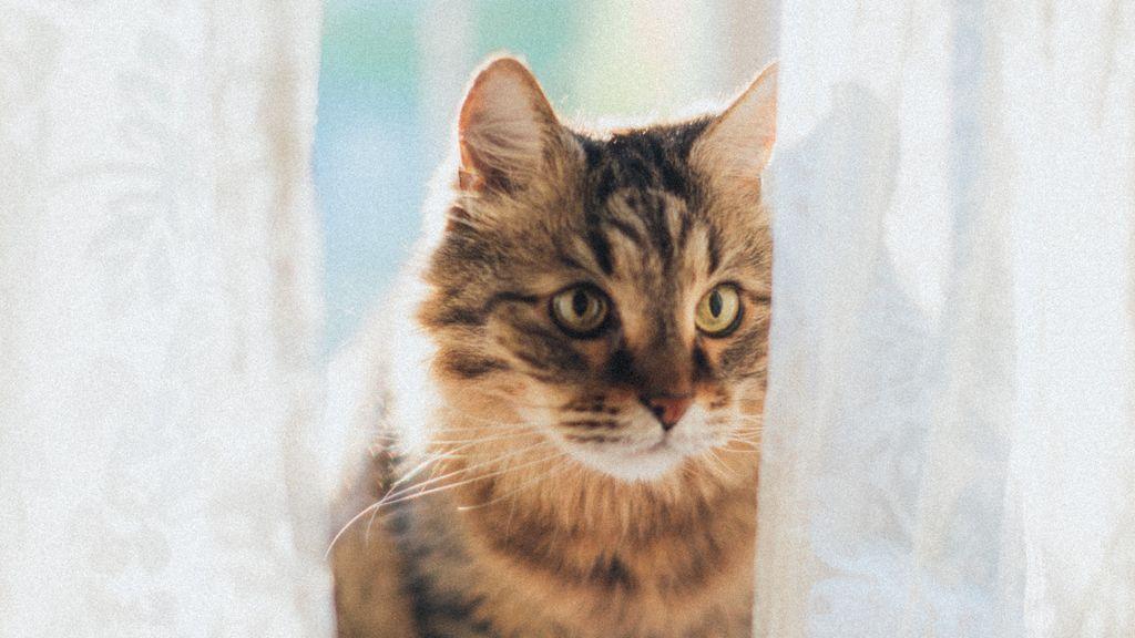 Los gatos y el atún, una relación de amor y odio que deberías controlar