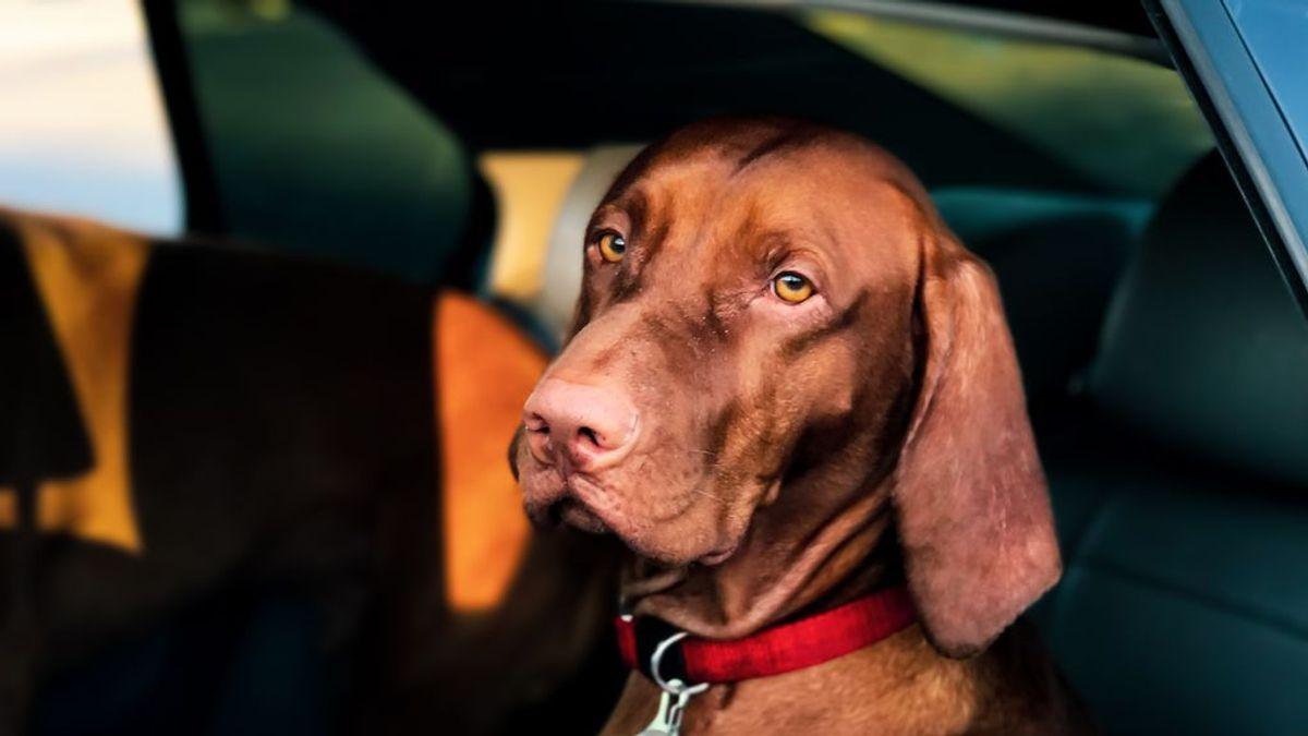 Las vacaciones de tu vida, siempre con tu perro: claves para viajar con mascotas