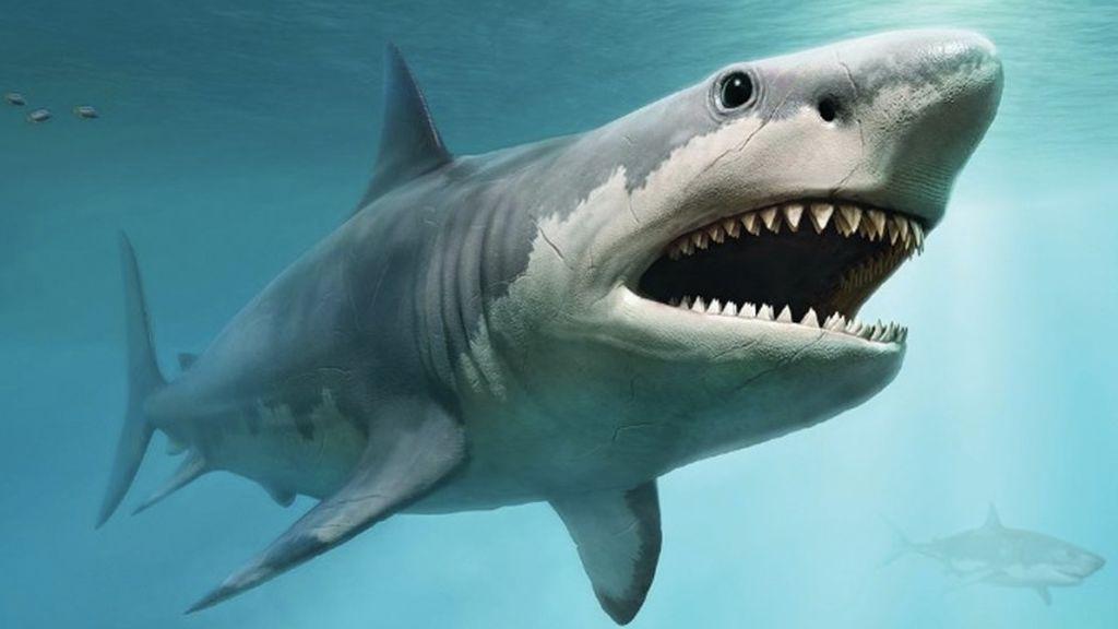 Una pareja se encuentra un diente de megalodón de 5 millones de años