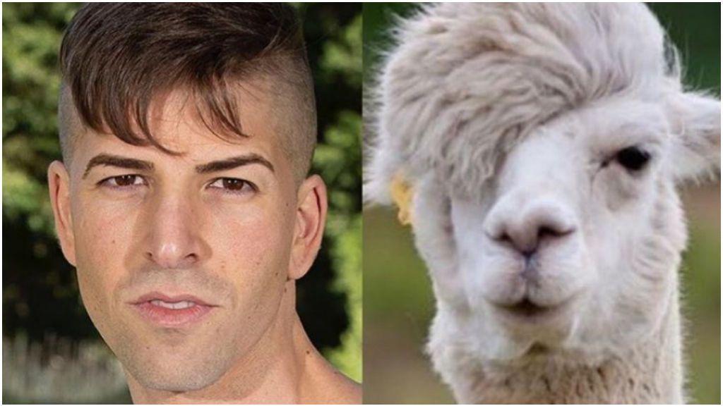 El pelo de Labrador, el zasca a Oriana y más memes del estreno de 'La casa fuerte'