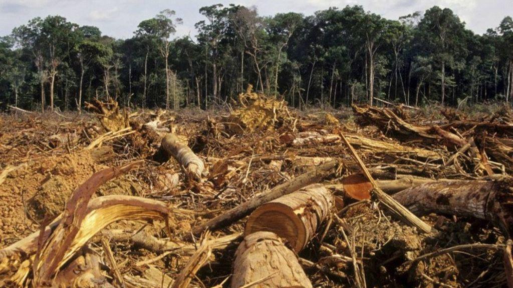 La mitad de la Tierra todavía se puede salvar del daño humano