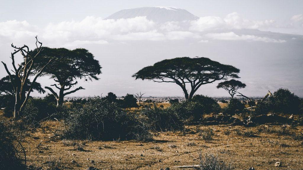 Safaris sostenibles: aventura a los 50 cuidando del planeta