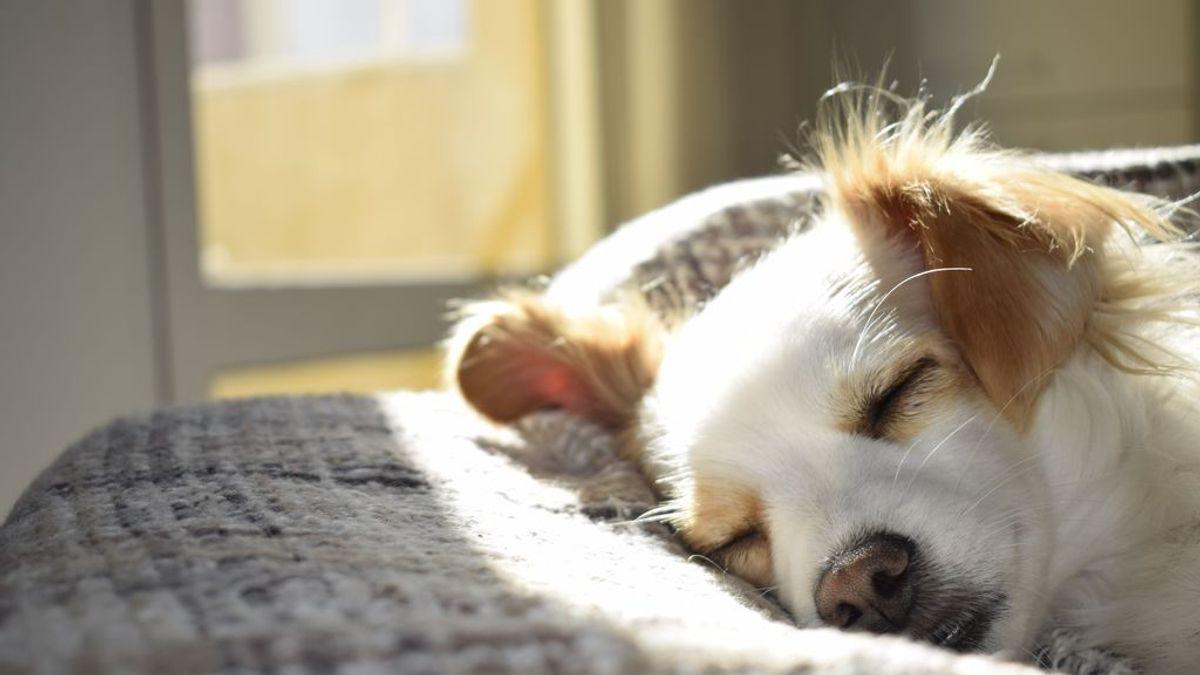 Epilepsia en perros: cómo afecta esta enfermedad a nuestras mascotas