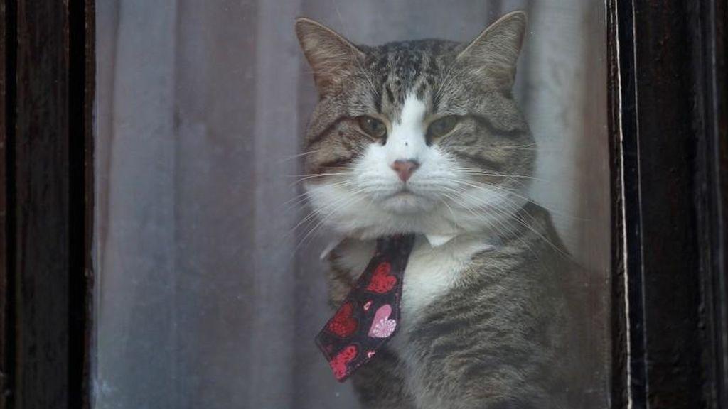 Los hogares esconden una sustancia química que puede causar problemas a los gatos