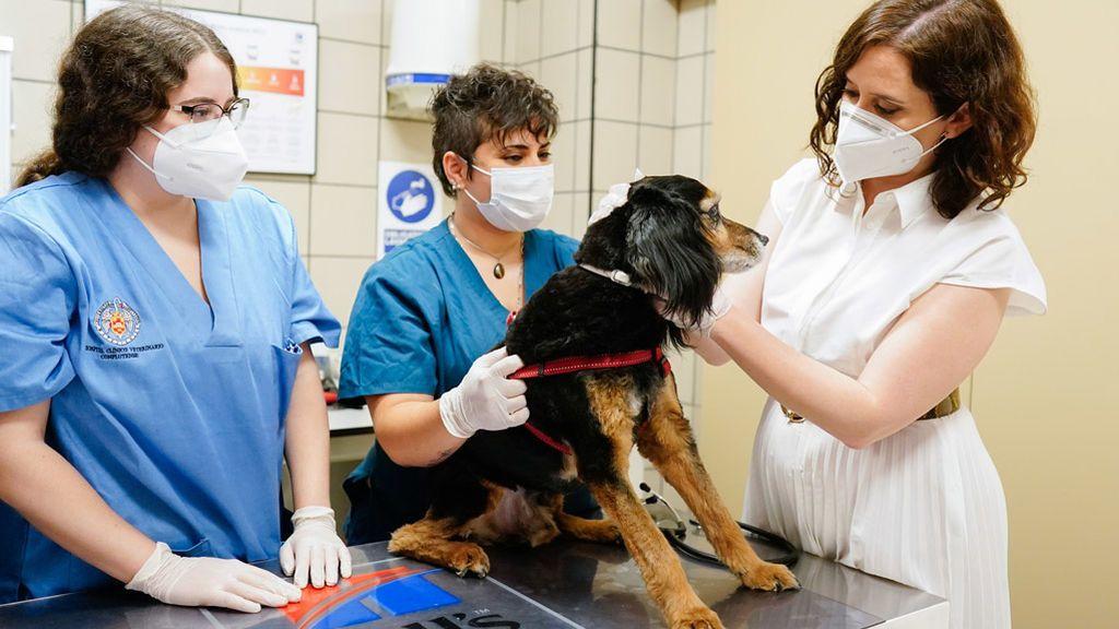 Madrid habilitará albergues para mascotas infectadas de COVID-19