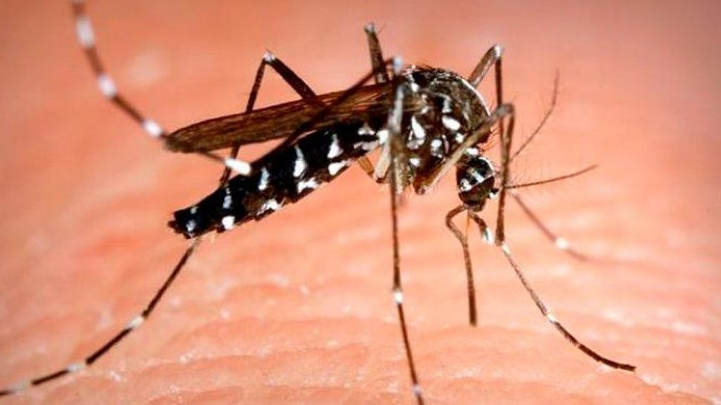 El mosquito tigre y otros bichos de los que debes protegerte este verano