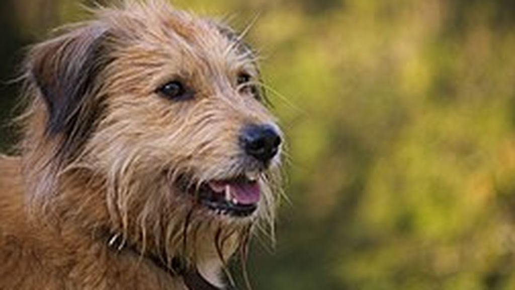 Imputado por abandonar el perro que adquirió para el confinamiento