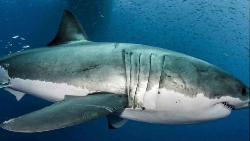 Un joven de EEUU sobrevive al ataque de un tiburón gracias a su padre