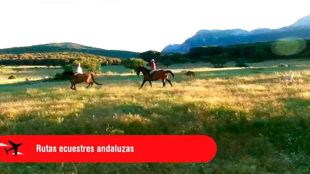 PLANES CUATRO PGM 63 - Andalucía Ecuestre