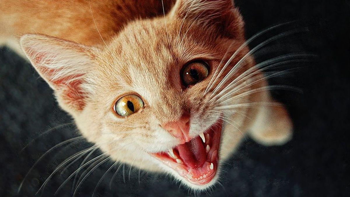 La relatividad del tiempo: la fórmula matématica para calcular la edad humana de los gatos