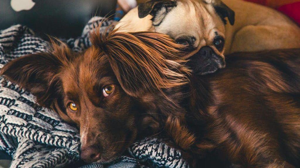 Taquicardia, falta de aire, miedo, náuseas... el impacto en animales del uso de pirotecnia