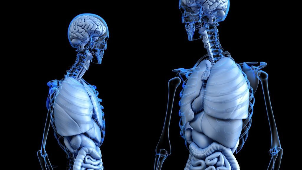 Menopausia y pérdida de masa ósea, ¿cómo prevenirlo?