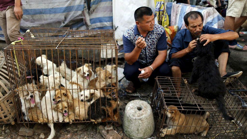 China celebra su polémico festival de carne de perro en plenos rebrotes por el coronavirus
