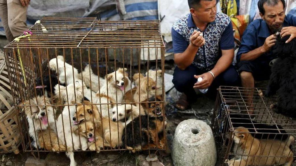Mercado de Yulin con perros a la venta, destinados a su consumo