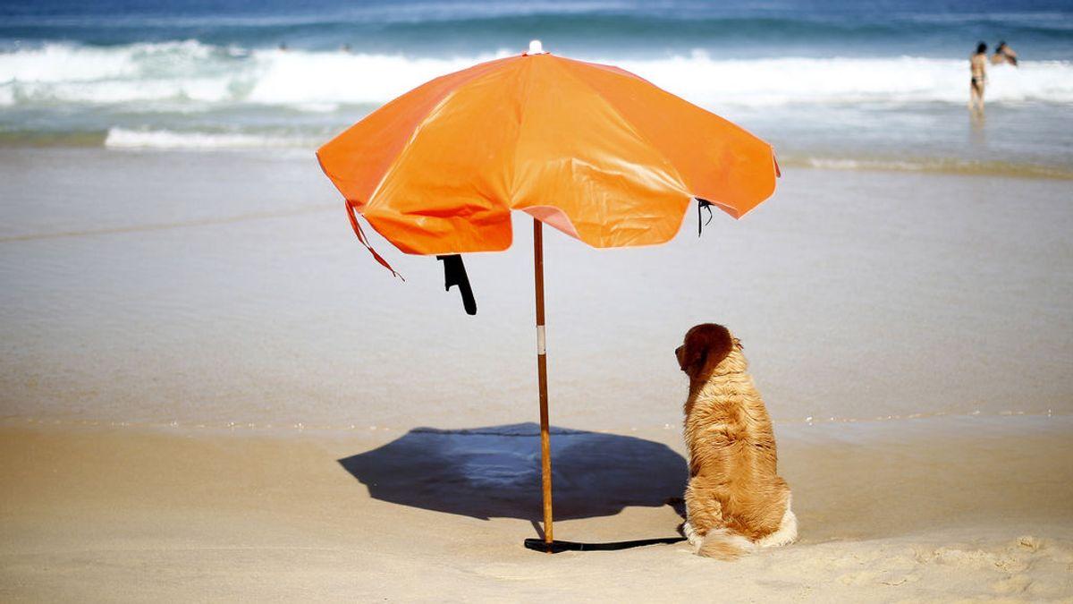 Cómo afecta la ola de calor a las mascotas: el agua, indispensable
