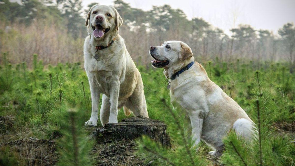 El método de la manada: consigue que tu perrete deje atrás sus conductas erráticas y se convierta en un animal más tranquilo