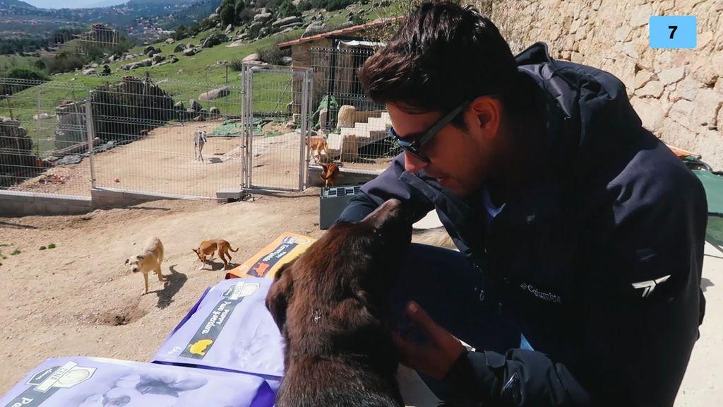 Diego Matamoros muestra su amor por los perros con una visita a una protectora (2/2)