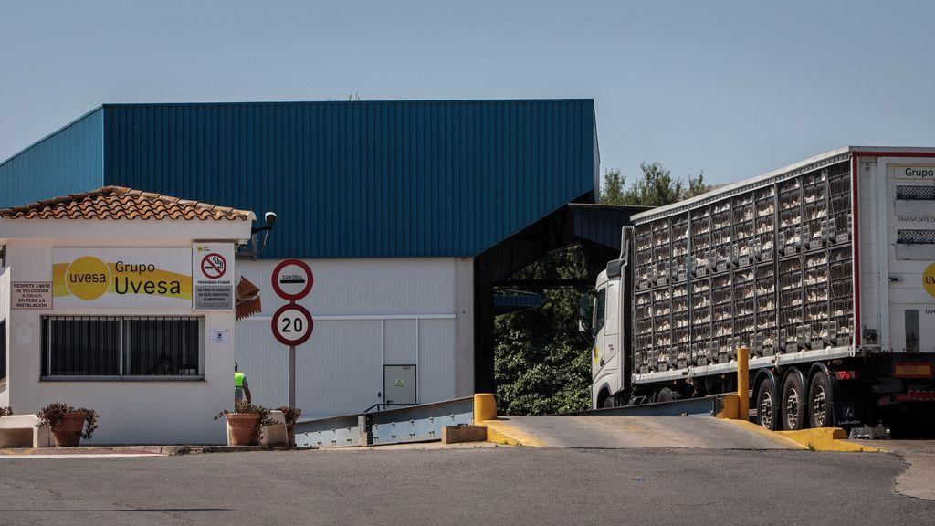 Brote de coronavirus en una empresa cárnica en Rafelbunyol: suben a 14 casos tras detectarse siete nuevos contagios