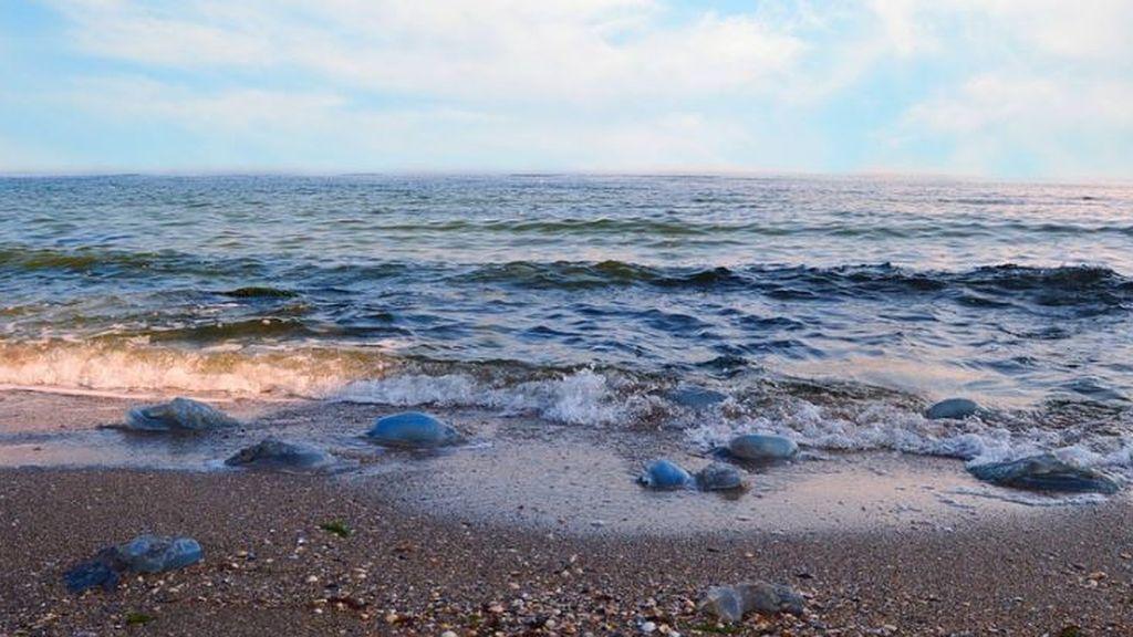 Playas y medusas: la app que avisa de su presencia en verano