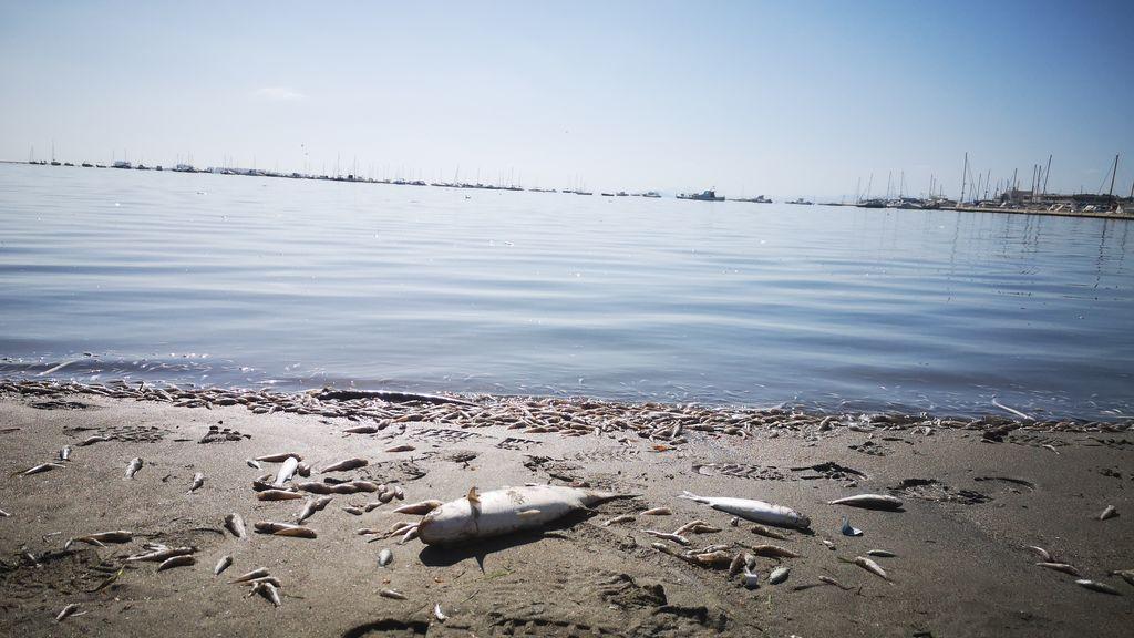 Banderas negras 2020: las playas españolas que suspenden por su contaminación