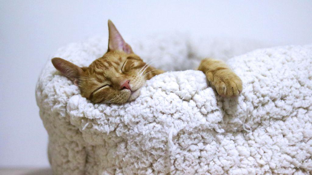 De vacaciones, siempre con tu gato: trucos para que el trayecto no le estrese mucho