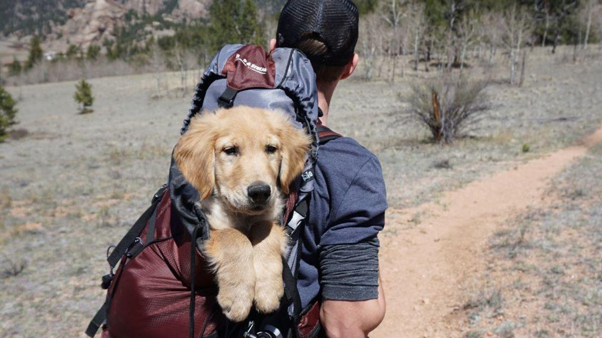 No sin mi perro: lo que tienes que saber para viajar con tu animal de compañía