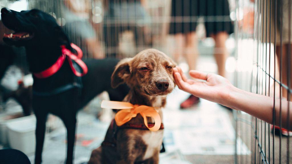 Con referencias, personal cualificado, espacio y papeles en orden: claves para encontrar la mejor residencia para tu mascota