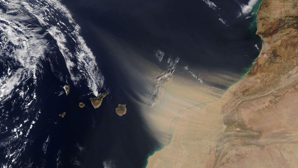"""La calima no es lo único que llega a Canarias: los vientos arrastran la mariposa """"laberinto del desierto"""""""