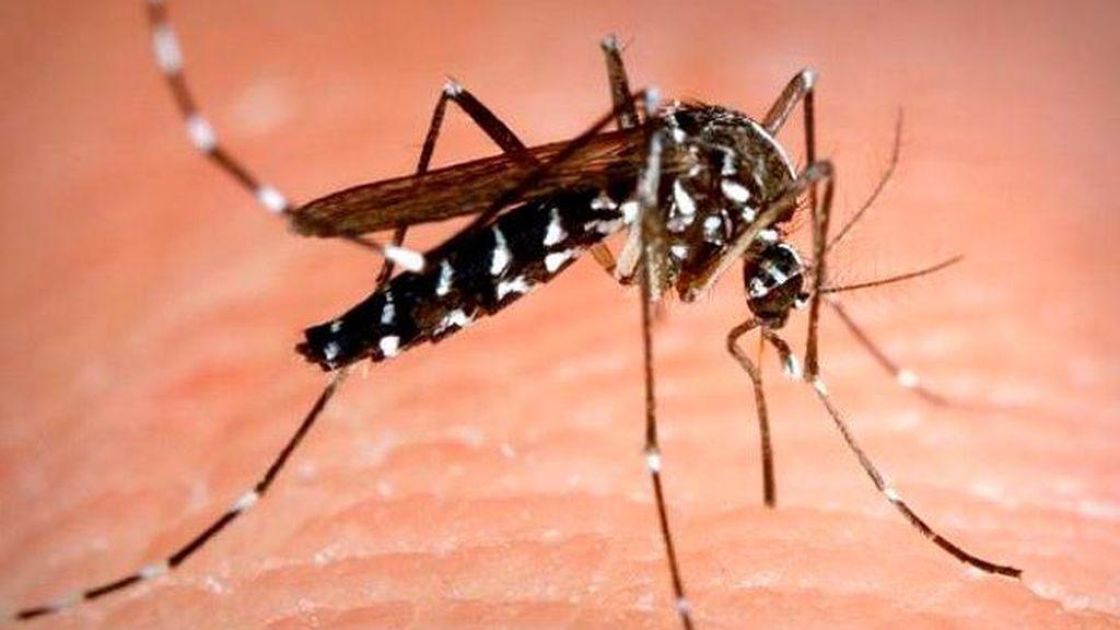 Segundas residencias y piscinas hinchables, los destinos favorito para el mosquito tigre