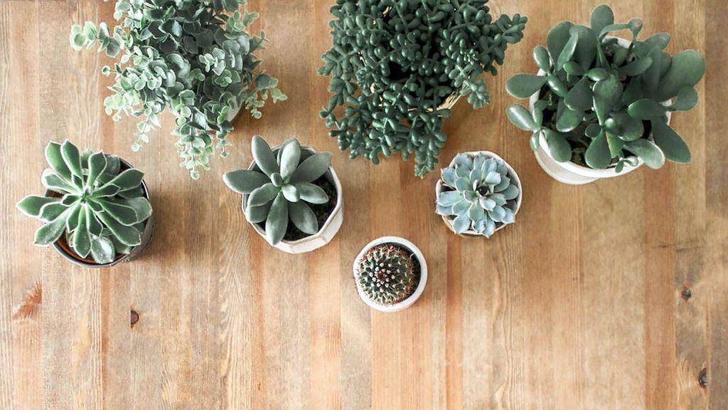 plantas-verano
