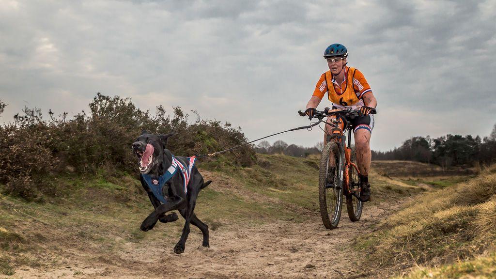 Bici, perro y campo: mejores razas caninas para practicar bikejoring, un deporte que es tendencia
